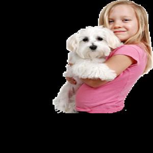 Her Cins Köpek Satışı