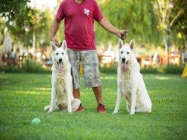 Beyaz Alman Kurdu Köpeklerimiz ... galerisini incelemek için tıklayınız.