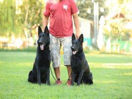 Siyah Alman Kurdu Köpeklerimiz ... galerisini incelemek için tıklayınız.