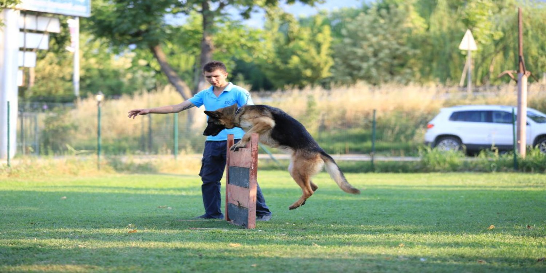 Köpek Eğitimi kapak resmi