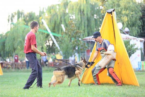 Köpek Eğitimi resimleri