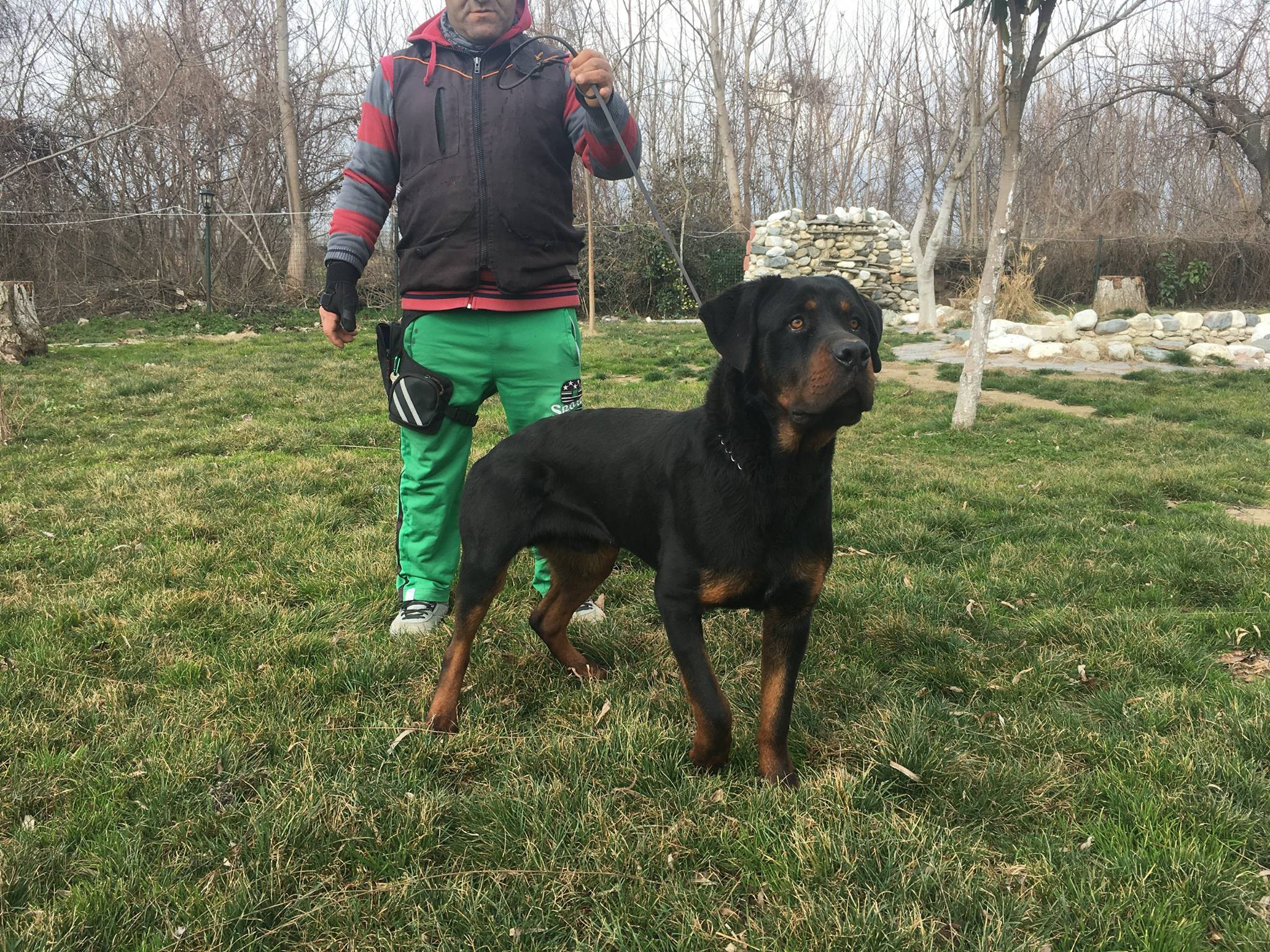 Eğitimli Rottweiler 11 Aylık